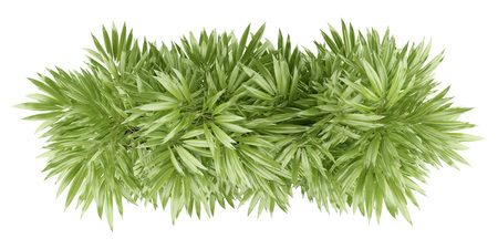 vue de dessus de la plante de bambou en pot isolé sur fond blanc