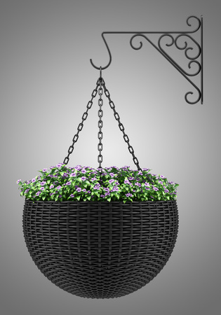 isolated flower: flowers in wall hanging pot isolated on gray background