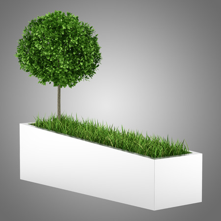 concrete: tree and grass in concrete planter isolated on gray background Stock Photo