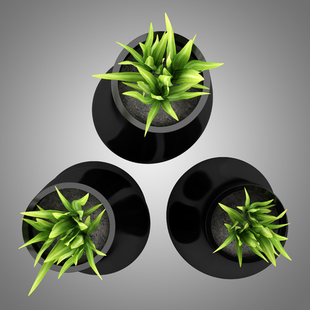 plant in pot: top view of three houseplants in black vases isolated on gray background