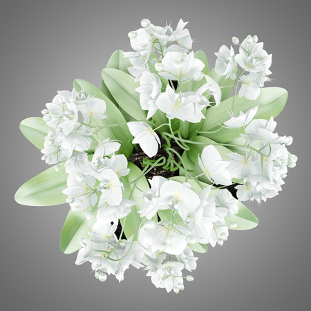 plant in pot: top view of orchid flowers in pot isolated on gray background