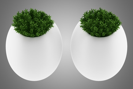 green plants: two wall plants in pots isolated on gray background