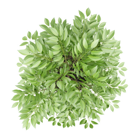 plant in pot: top view of potted tree isolated on white background