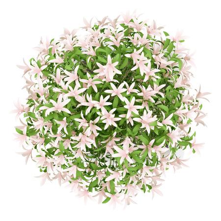 Vista dall'alto di albero in fiore in vaso isolato su sfondo bianco Archivio Fotografico - 54621241