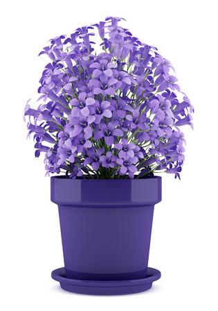 paarse bloemen in pot op een witte achtergrond. 3d illustratie