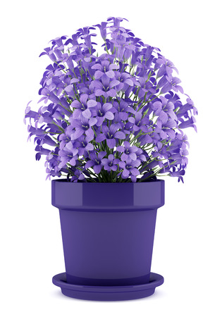 bunch of flowers: purple flowers in pot isolated on white background. 3d illustration Stock Photo
