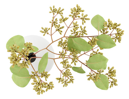 nosegay: top view of sugar gum twigs in vase isolated on white background. 3d illustration Stock Photo