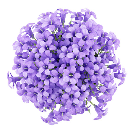 top view of purple flowers in pot isolated on white background. 3d illustration