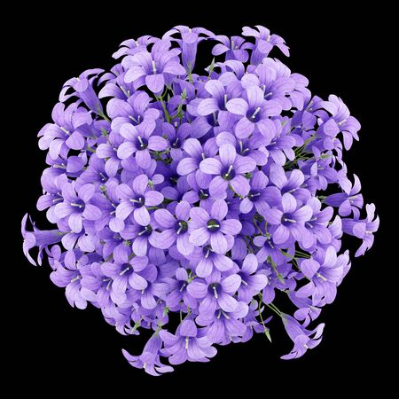 nosegay: top view of purple flowers in pot isolated on black background. 3d illustration