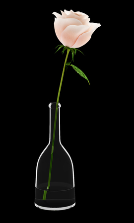 nosegay: pink rose in glass vase isolated on black background Stock Photo