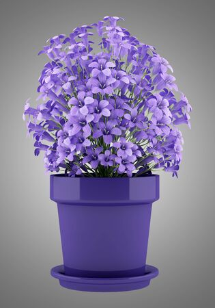 nosegay: purple flowers in pot isolated on gray background. 3d illustration