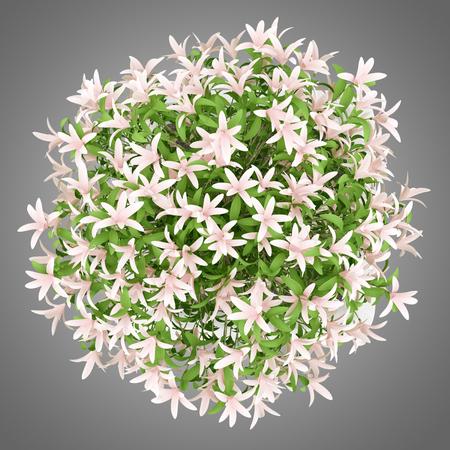 Vista dall'alto di albero in fiore in vaso isolato su sfondo grigio Archivio Fotografico - 59498985