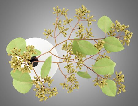 nosegay: top view of sugar gum twigs in vase isolated on gray background. 3d illustration Stock Photo