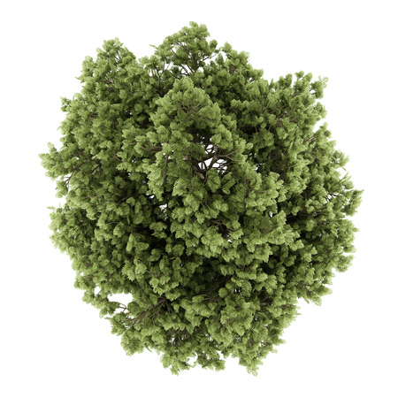 tree top view: top view of common ash tree isolated on white background. 3d illustration Stock Photo