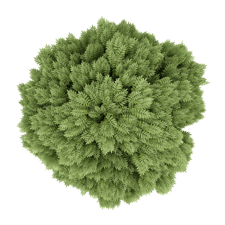 excelsior: top view of common ash tree isolated on white background. 3d illustration Stock Photo