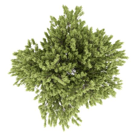vista dall'alto di albero comune di faggio isolato su sfondo bianco. illustrazione 3D