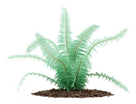 fern plant isolated on white background. 3d illustration