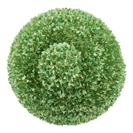 green plants: top view of boxwood plant isolated on white background. 3d illustration