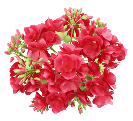 top view of red geranium flowers isolated on white background. 3d illustration Stock Photo