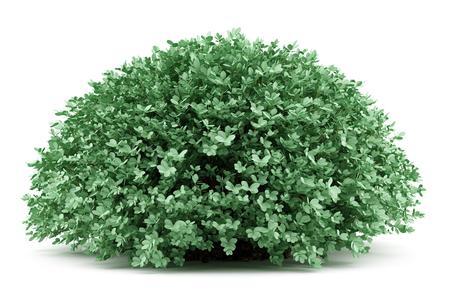 round boxwood plant isolated on white background. 3d illustration Stock Illustration - 72951148