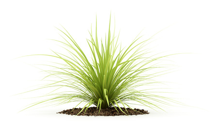 yucca plant isolated on white background. 3d illustration