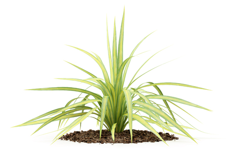 yellow yucca plant isolated on white background. 3d illustration Stock Photo