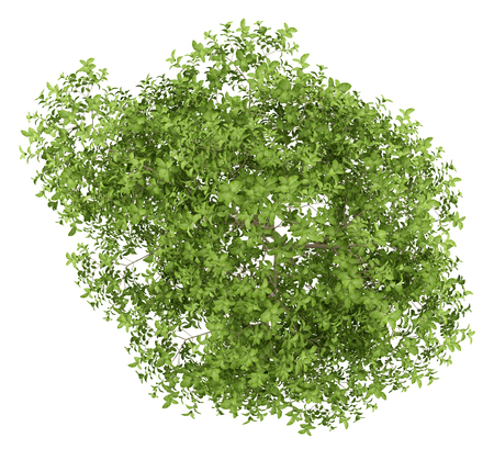 top view of apple tree isolated on white background. 3d illustration