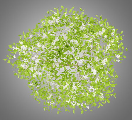 top view of flowering pear tree isolated on gray background. 3d illustration