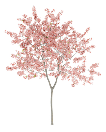 flowering peach tree isolated on white background. 3d illustration