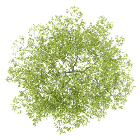 top view of peach tree isolated on white background. 3d illustration