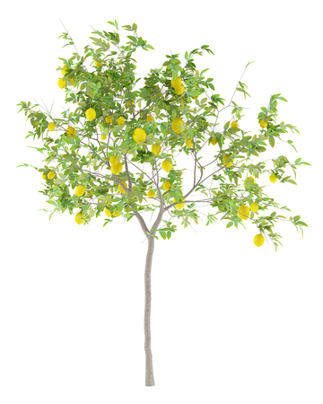 lemon tree with lemons isolated on white background. 3d illustration Foto de archivo - 102756649