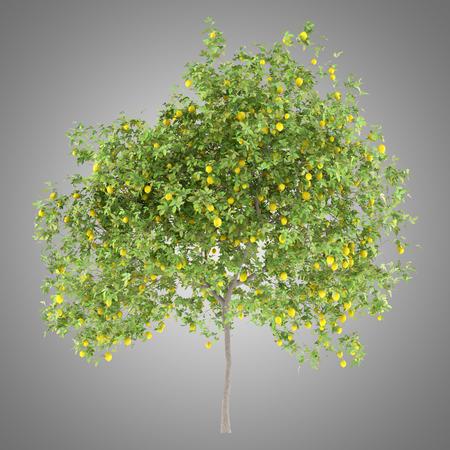 lemon tree with lemons isolated on gray background. 3d illustration