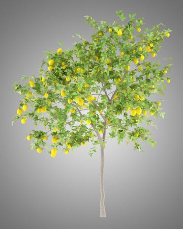 lemon tree with lemons isolated on gray background. 3d illustration Foto de archivo - 104163479