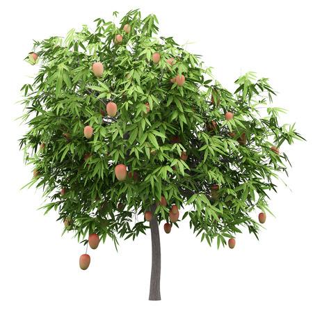 mango tree with mango fruits isolated on white background. 3d illustration Stok Fotoğraf