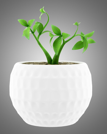 potted houseplant isolated on gray background. 3d illustration Banque d'images - 117160012