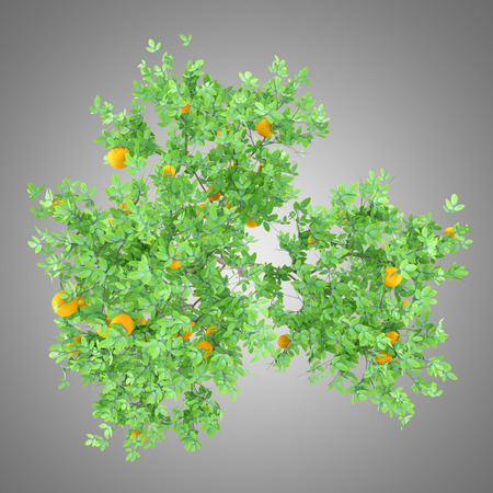 orange tree with oranges isolated on gray background. top view. 3d illustration Banque d'images - 117160023