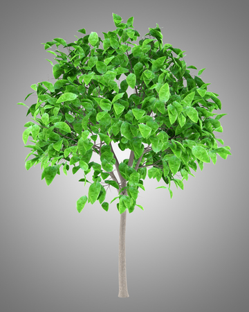 grapefruit tree isolated on gray background. 3d illustration