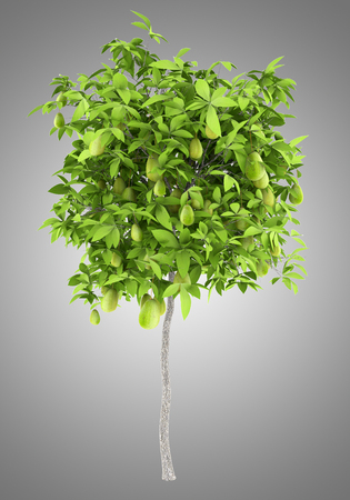 avocado tree with avocados isolated on gray background. 3d illustration