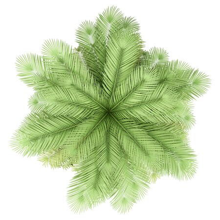 coconut palm tree isolated on white background. top view. 3d illustration