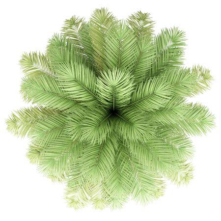 Palm tree isolated on white Фото со стока