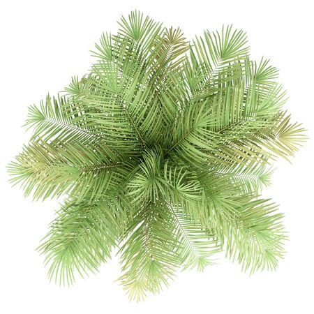 Palmier isolé sur blanc