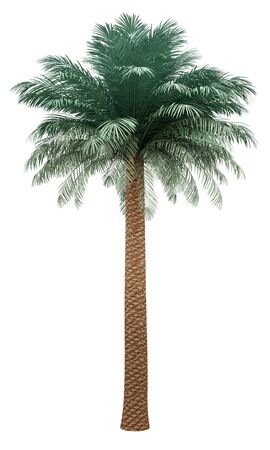 silver date palm tree isolated on white background. 3d illustration