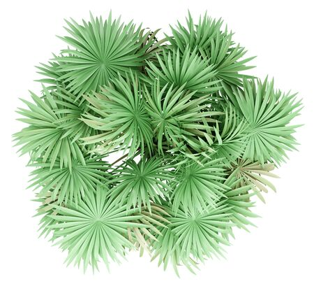 thatch palm tree isolated on white background. top view. 3d illustration