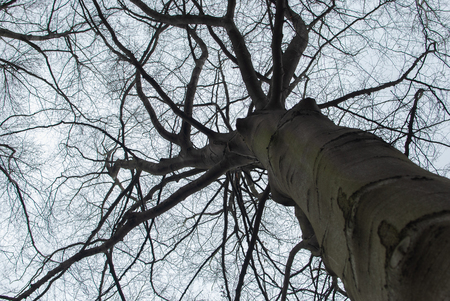 Bare tree from below