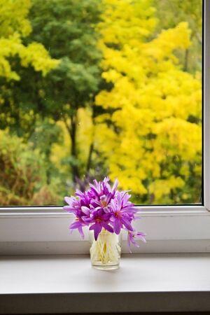 windowsill: bouquet of autumn crocuses on the windowsill