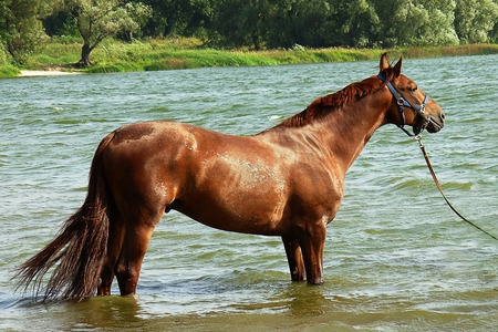 dnieper: Bathing in the Dnieper River red horse Stock Photo
