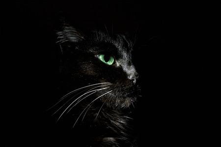 black eye: black cat on a black background in low key