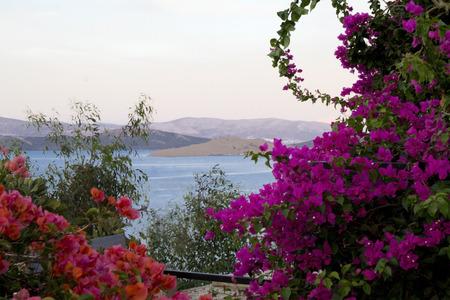 jardines con flores: arbustos rosa y buganvillas púrpura en la orilla del mar Foto de archivo
