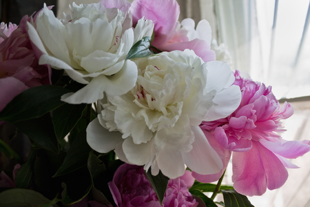 stillife: bouquet of white and pink peonies closeup Stock Photo