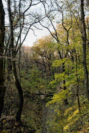 ravine: ravine in the woods with autumn trees Stock Photo